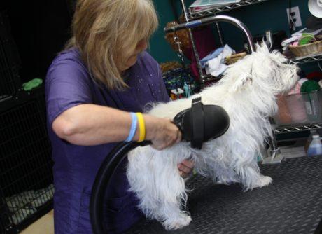 grooming animals